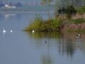vodní ptáci