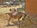 05 kozy ZOO Tábor