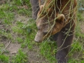 23 medvěd čenichá ZOO Tábor