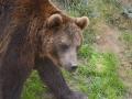 24 medvěd na výzvědách ZOO Tábor