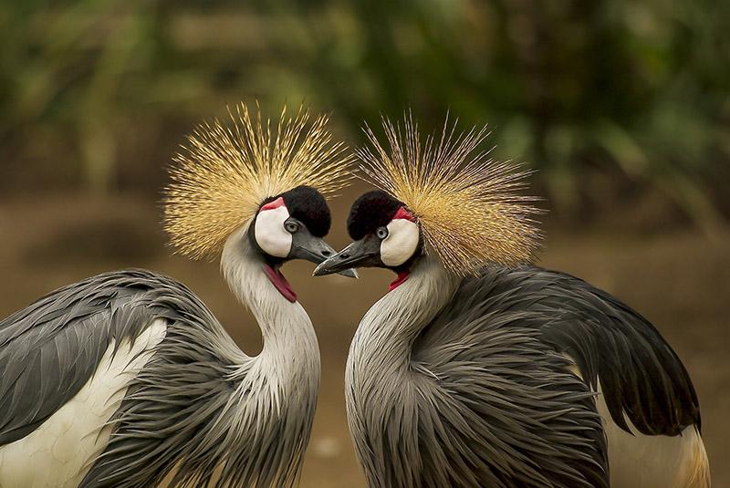 laska-birds