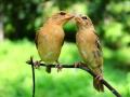 laska-ptaci