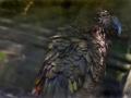 nestor kea