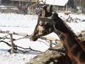 zoo-jihlava-zima-02