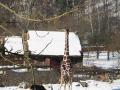 zoo-jihlava-zima-04