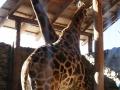 zoo-jihlava-zima-05