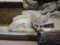 zoo-jihlava-zima-06