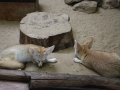 zoo-jihlava-zima-07