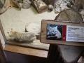 zoo-jihlava-zima-08