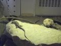 zoo-jihlava-zima-09