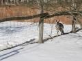 zoo-jihlava-zima-10