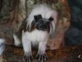 zoo-jihlava-zima-12