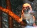 zoo-jihlava-zima-13