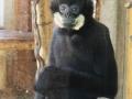 zoo-jihlava-zima-15