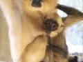 zoo-jihlava-zima-16