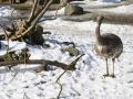 zoo-jihlava-zima-17