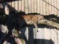 zoo-jihlava-zima-19