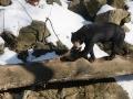 zoo-jihlava-zima-20