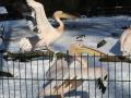 zoo-jihlava-zima-21