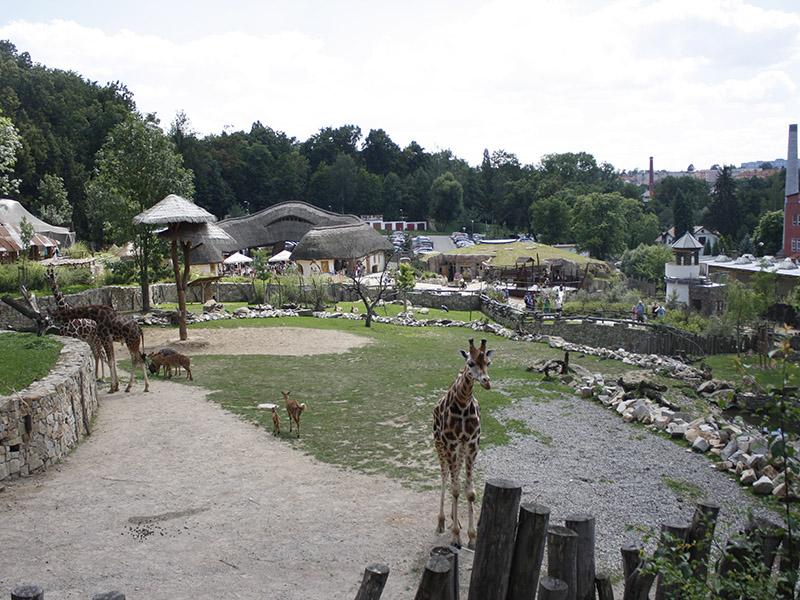 žirafy v jihlavské zoo-04