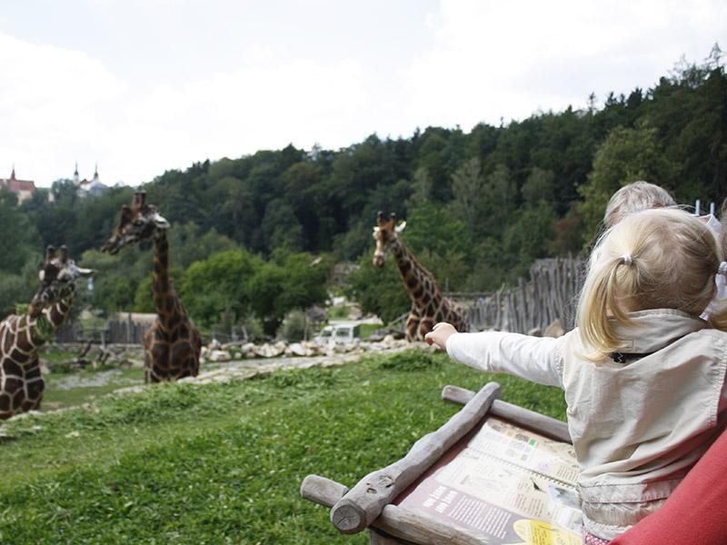 žirafy v jihlavské zoo-07
