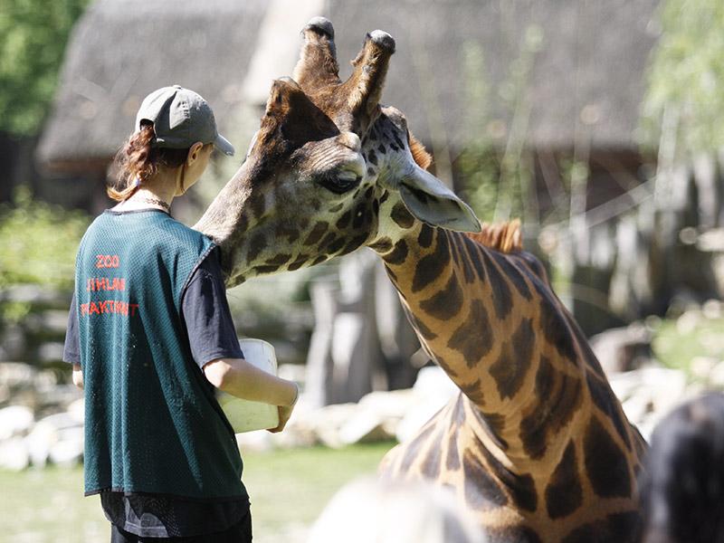 žirafy v jihlavské zoo-09
