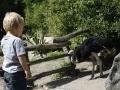 zoo-jihlava-12