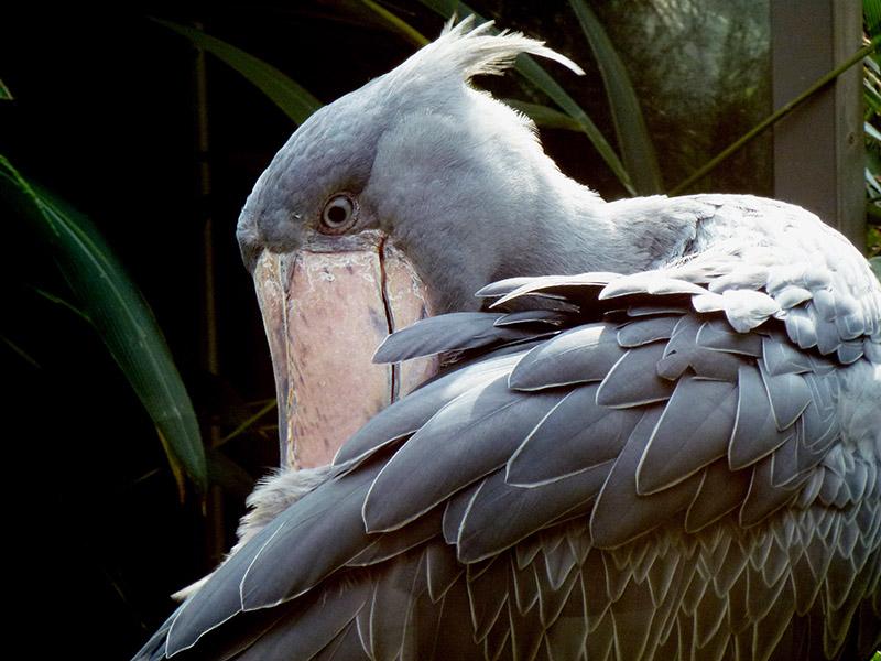 ptaci-mokrady-06