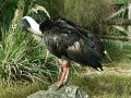 ptaci-mokrady-02