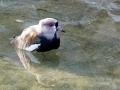 ptaci-mokrady-07