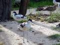 ptaci-mokrady-11