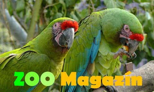 ZOO Magazin zoomagazin.cz