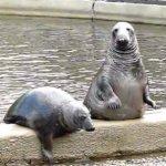 V Zooparku Chomutov tuleni předvádějí kousky