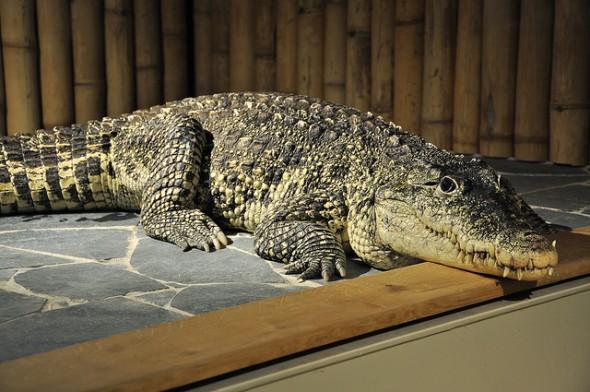 Krokodýlí galerie Praha
