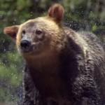 13 zvířat ve zpomalených záběrech