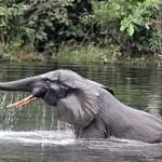 Český pes bude chránit slony