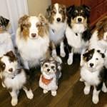 Psi vnímají lidskou řeč podobně jako my