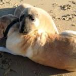 Tuleň si hraje s lidmi i psy