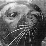 Hoover mluvící tuleň