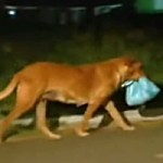 Lilica – psí solidarita