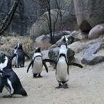 Tučňáci nebo vydry nahradí lachtany v ZOO Ústí