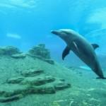 Zvuky delfínů usnadní komunikaci potápěčům