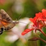 Motýl, nebo pták?