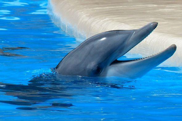 delfín zrcadlový test