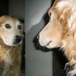 pes a zrcadlo