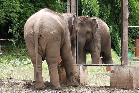 slon zrcadlový test
