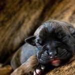 20 věcí, které jste o psech (ne)věděli