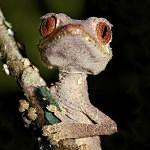 Kůže gekonů má samočisticí schopnost