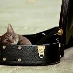 Kočky relaxují za zvuků hudby
