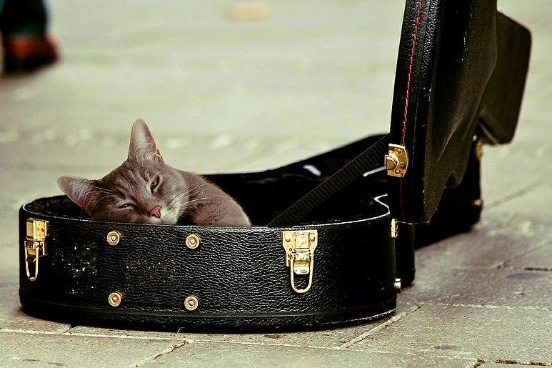 kočka 2 M